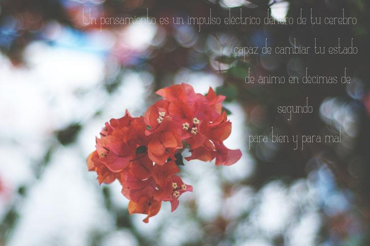 PuertoMogan2bis